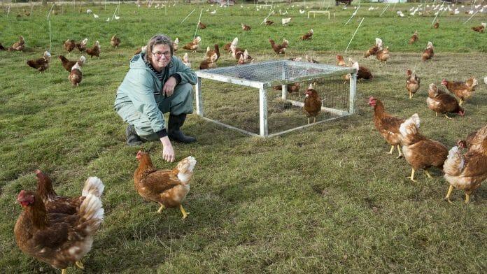 Maria Karlsson sitter ute på gräset bland sina 2000 höns