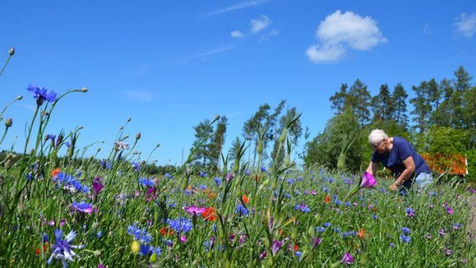 Bild på en blomsteräng