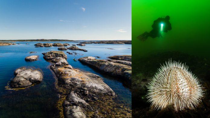 Foto på Koster över och under vattenytan.