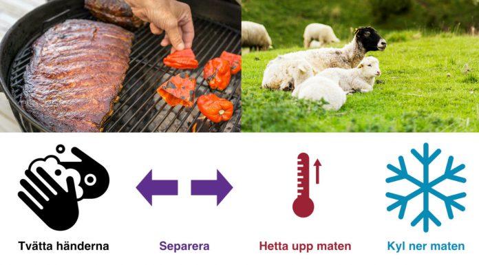 Blanda aldrig rått kött och grönsaker och undvik picknick där djur betar, uppmanar Smittskydd Västra Götaland.