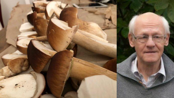 Karljohan anses av många vara en av de allra godaste matsvamparna. Just nu finns den och andra soppar i mängder i skogarna i vårt område berättar svampexpert Magnus Neuendorf.