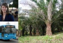 Västtrafiks hållbarhetschef, Hanna Björk, en buss och en oljeplalm