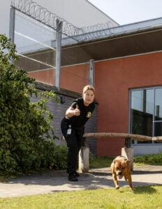 Leta! Ettåriga Doriz får i uppdrag att söka av en innergård. Hon är handplockad för att utbildas till narkotikahund. Som komplement till Bosse och Joy ville säkerhetsavdelningen också ha en mindre hund som lättare kan ta sig in i små utrymmen.
